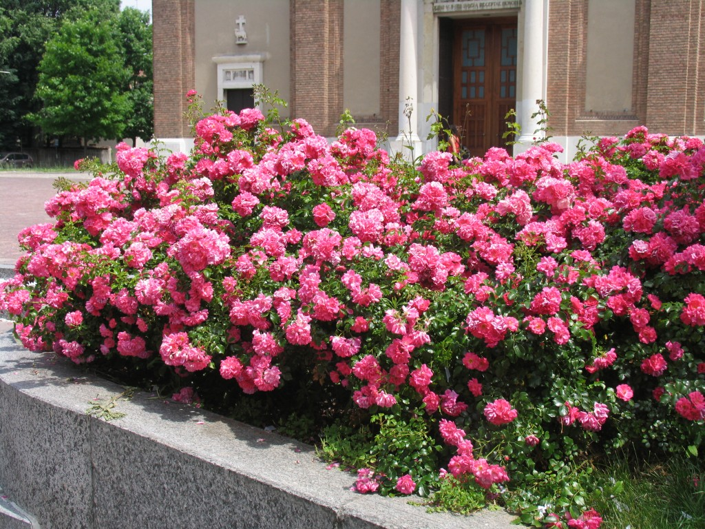 Aiuole fiorite a cernusco necessit o eccessi psergio it for Aiuole fiorite immagini